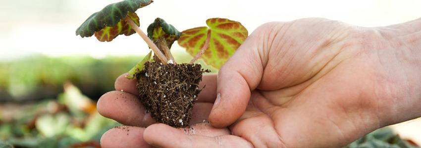 jungpflanzen.jpg